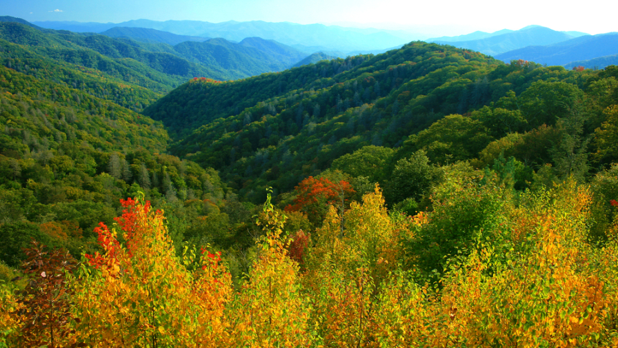 Top 5 Reasons Why Families Love Staying in Our 3 Bedroom Condos in Gatlinburg TN