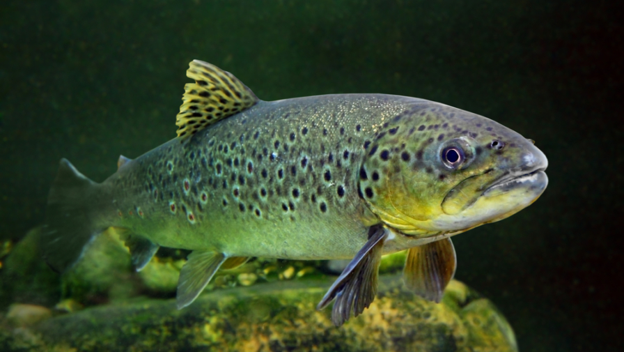 The Ultimate Guide to Smoky Mountain Trout Fishing